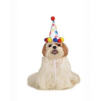 Boy Pet Birthday Hat